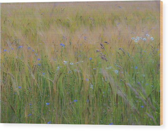 Dreamy Meadow Wood Print