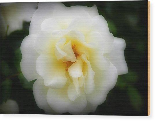 Dreamy White Rose Wood Print