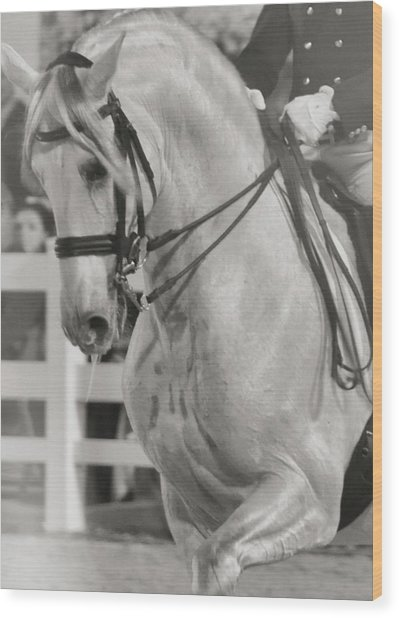 Dressage Perfection Wood Print by JAMART Photography