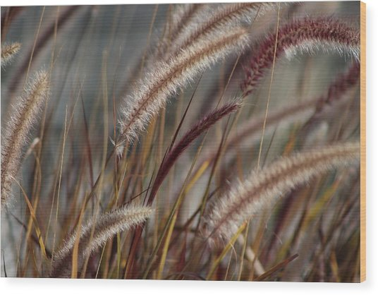 Dried Desert Grass Plumes In Honey Brown Wood Print