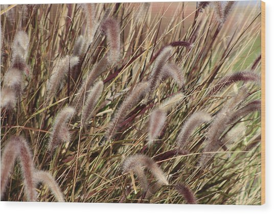 Dried Grasses In Burgundy And Toasted Wheat Wood Print