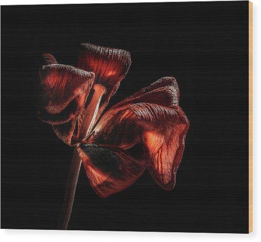 Dried Tulip Blossom Wood Print