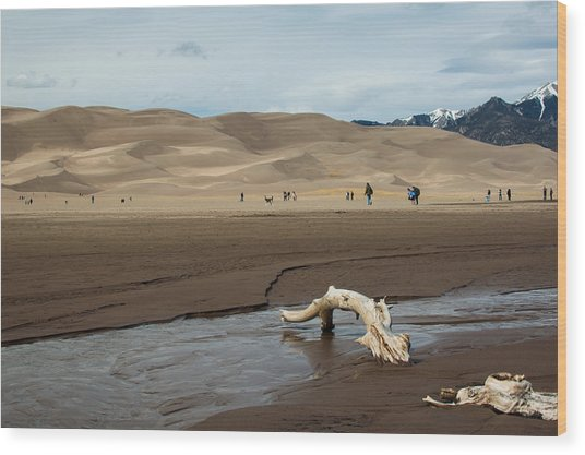 Drift Wood And Dunes Wood Print