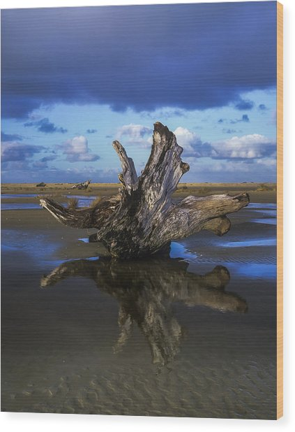 Driftwood And Reflection Wood Print