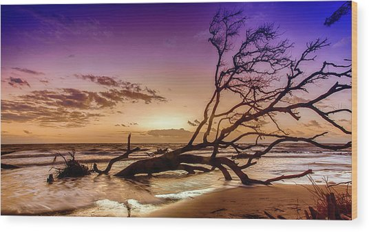 Driftwood Beach 2 Wood Print