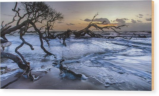 Driftwood Beach 3 Wood Print