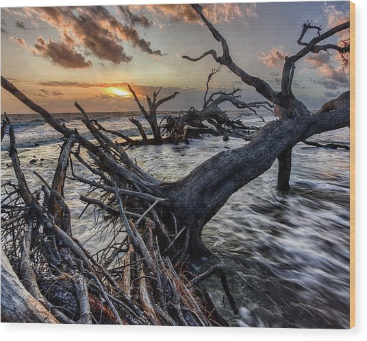 Driftwood Beach 4 Wood Print