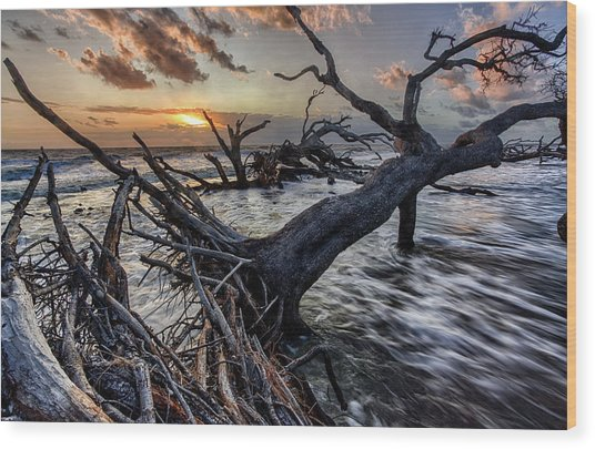 Driftwood Beach 5 Wood Print