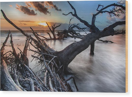 Driftwood Beach 6 Wood Print