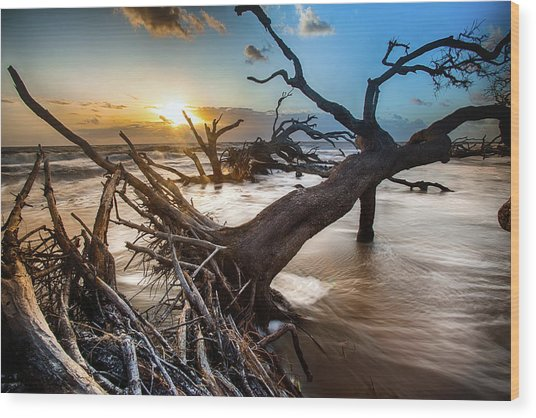 Driftwood Beach 7 Wood Print
