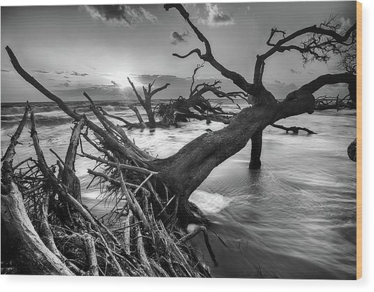 Driftwood Beach 8 Wood Print