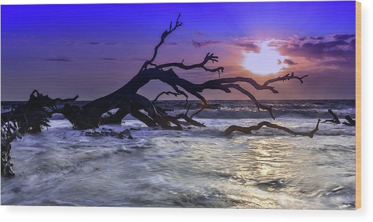Driftwood Beach 9 Wood Print