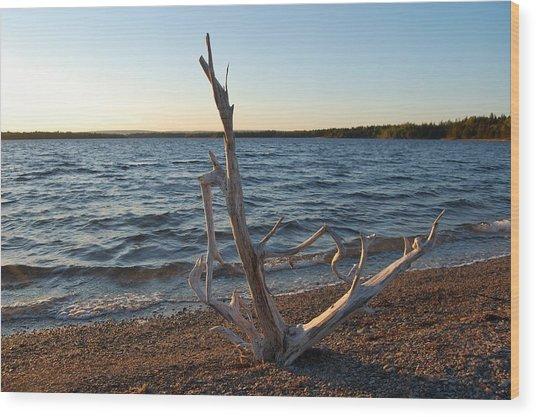 Driftwood Wood Print by Donald Mac Fadyen