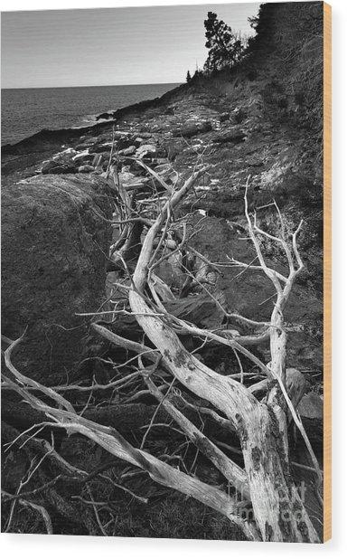 Driftwood Tree, La Verna Preserve, Bristol, Maine  -20999-30003 Wood Print