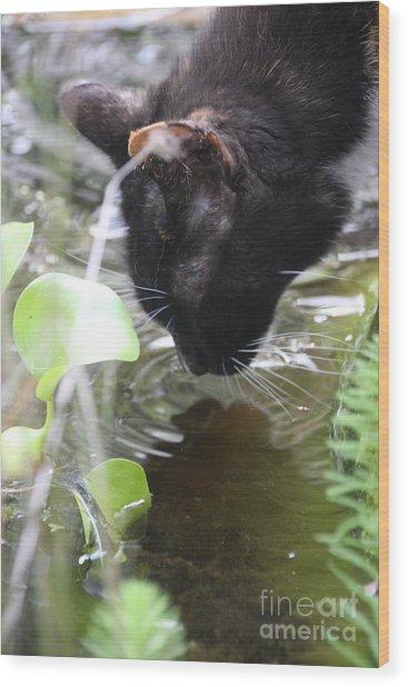 Drinking Kitty Wood Print