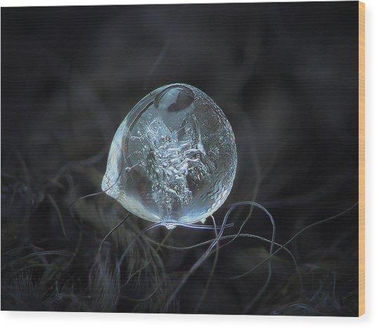 Drop Of Ice Rain Wood Print