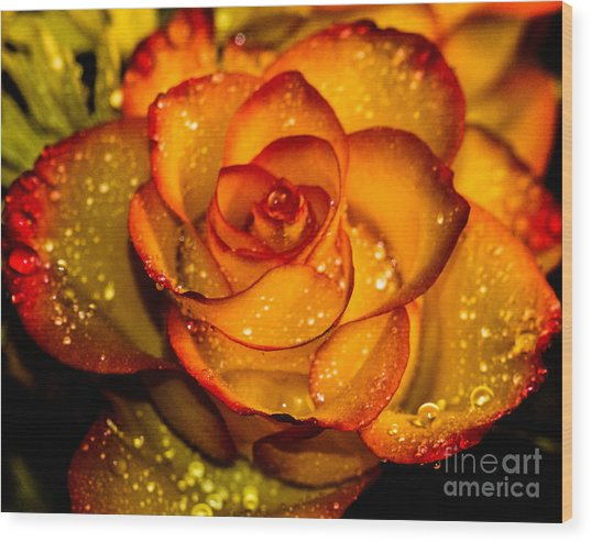 Droplet Rose Wood Print