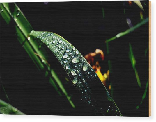 Droplets Of Water Wood Print by Robert Scauzillo
