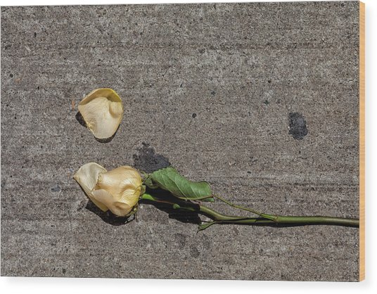Dropped Rose Wood Print by Robert Ullmann