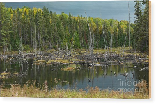 Drowned Trees Wood Print