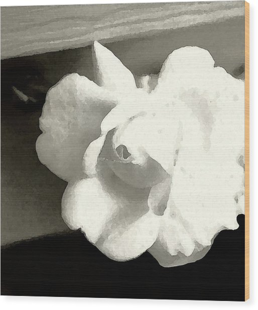 Dry Brushed Rose Wood Print by Emily Kelley