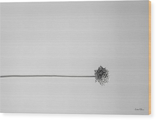 Dry Flower - Black And White Art Photo Wood Print