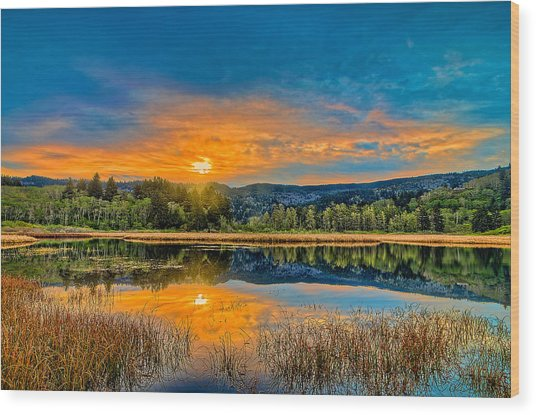 Dry Lagoon Spring Morning Wood Print