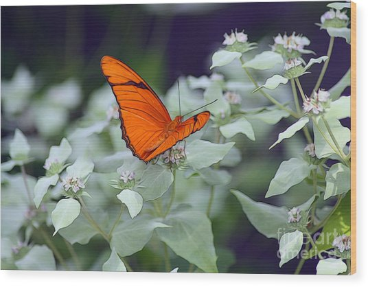 Wood Print featuring the photograph Dryas Iulia by Patti Whitten