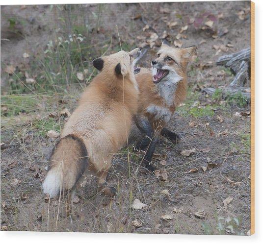 Dualing Red Foxes Wood Print by Ken Cornett