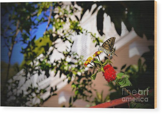 Dubrovniks Butterfly Wood Print