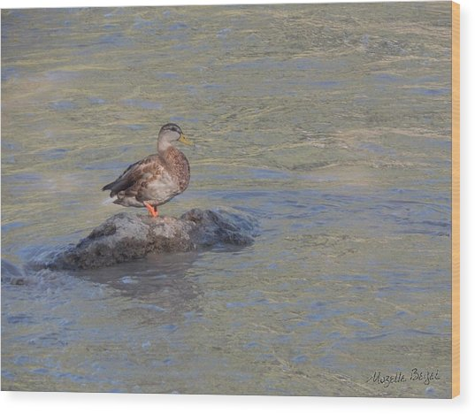 Duck Alone On The Rock Wood Print
