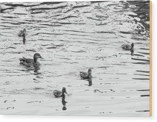 Duck And Ducklings Wood Print