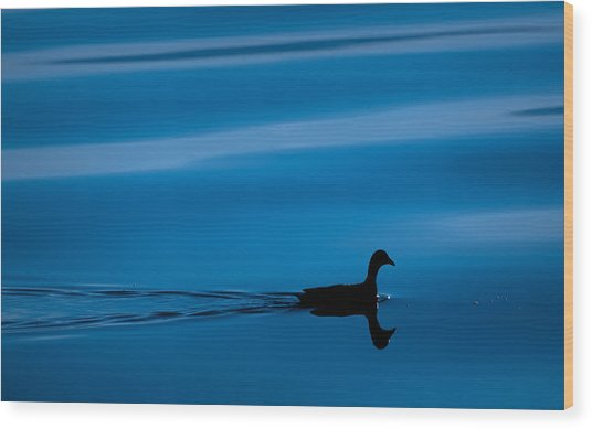 Duck Floating On A Lake Wood Print by Dane Strom