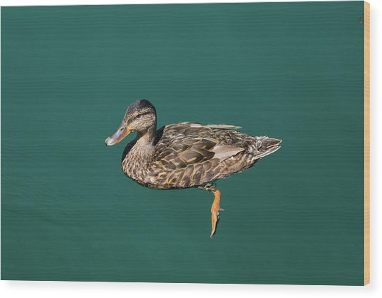 Wood Print featuring the photograph Duck Floats by Davor Zerjav