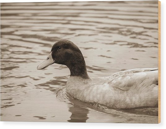 Duck In Pond Wood Print