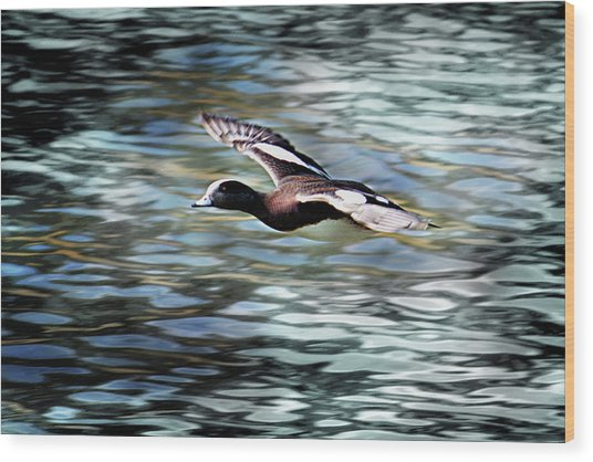 Duck Leader Wood Print