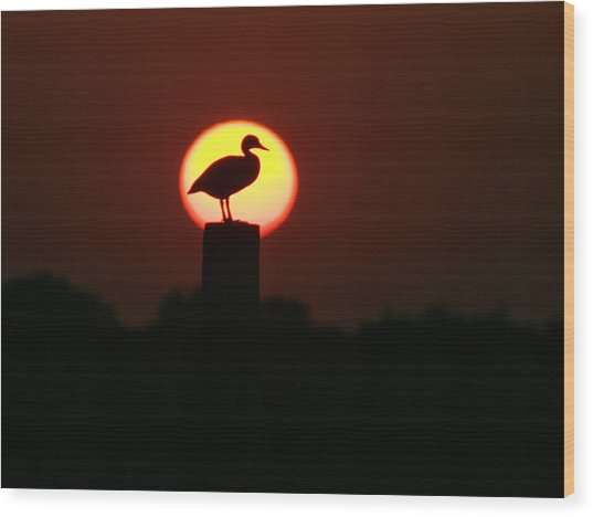 Duck On A Post Wood Print