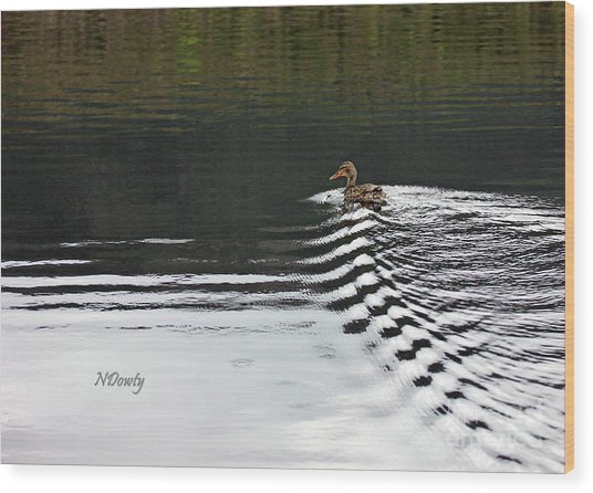 Duck On Ripple Wake Wood Print
