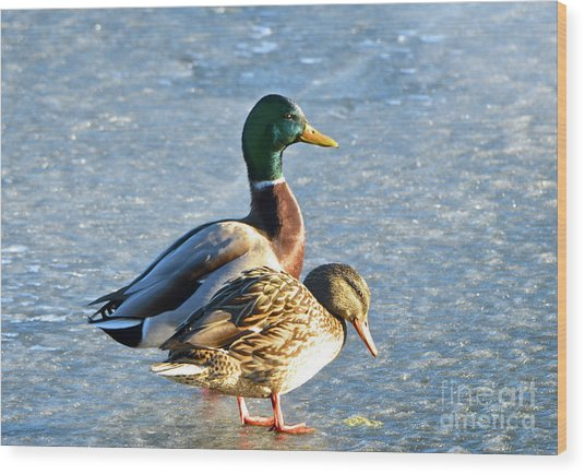 Duck Pair On Frozen Lake Wood Print
