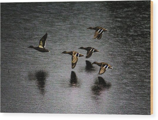 Duck Squadron Wood Print