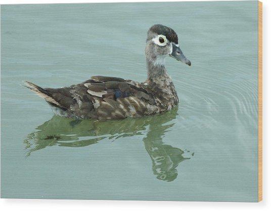Duckling Wood Print by Teresa Blanton