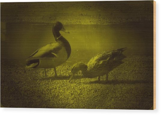 Ducks #3 Wood Print