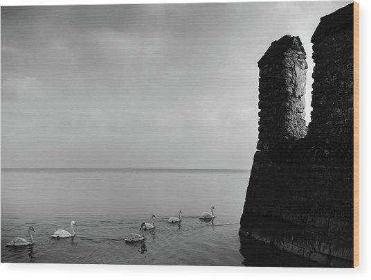 Ducks In Lake Garda, Italy Wood Print