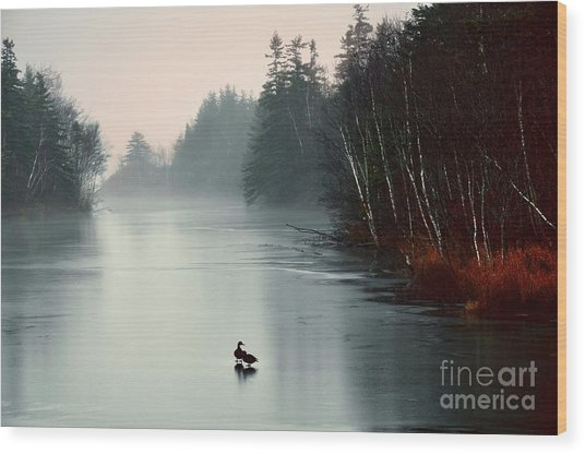 Ducks On A Frozen Pond Wood Print