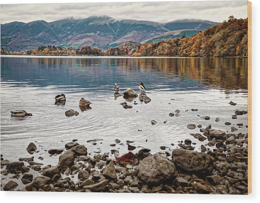 Ducks On Derwent Wood Print
