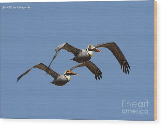 Duel Pelicans In Flight Wood Print