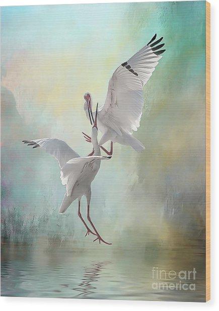 Duelling White Ibises Wood Print