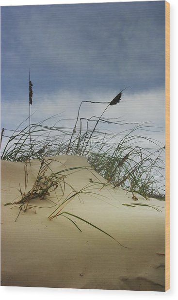 Dune And Beach Grass Wood Print