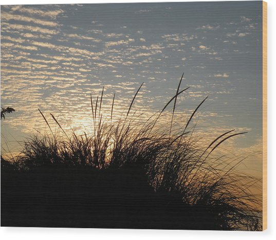 Dune Grass Wood Print by Donald Cameron