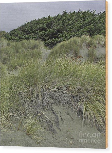 Bodega Dunes #3 Wood Print